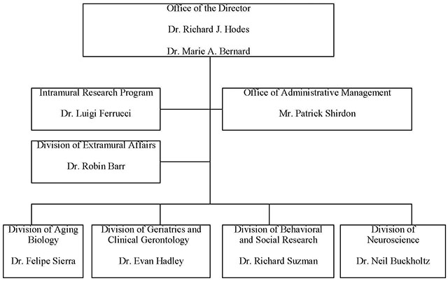 Organizational Structure diagram -- Office of the Director, Dr. Richard J. Hodes and Dr. Marie A. Bernard. All the following departments report directly to the Office of the Director, in 4 strata. 1 Intramural Research Program, Dr. Luigi Ferrucci. 2 Office of Administrative Management, Mr. Patrick Shirdon. 3 DIvision of Extramural Affairs, Dr. Robin Barr. 4 Division of Aging Biology, Dr. Felipe Sierra; Divisions of Geriatrics and Clinical Gerontology, Dr. Evan Hadley; Division of Behavioral and Social Research, Dr. Richard Suzman; Division of Neuroscience, Dr. Neil Buckholtz.