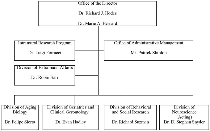 Organizational Structure diagram -- Office of the Director, Dr. Richard J. Hodes and Dr. Marie A. Bernard. All the following departments report directly to the Office of the Director, in 4 strata. 1 Intramural Research Program, Dr. Luigi Ferrucci. 2 Office of Administrative Management, Mr. Patrick Shirdon. 3 Office of Extramural Affairs, Dr. Robin Barr. 4 Biology of Aging Program, Dr. Felipe Sierra; Geriatrics and Clinical Gerontology Program, Dr. Evan Hadley; Behavioral and Social Research Program, Dr. Richard Suzman; Neuroscience and Neuropsychology of Aging Program, Dr. D. Steven Snyder (Acting).