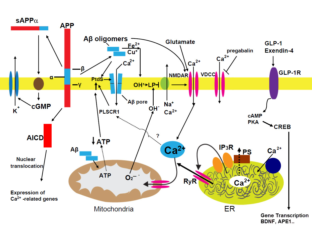 Pathogenic mechanisms of neuronal dysfunction