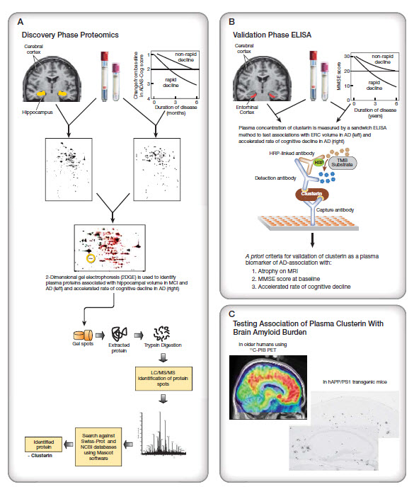 Schematic study design combining multi-modal neuroimaging with mass spectrometry-based proteomic analysis of plasma for discovery of biologically relevant biomarkers of AD