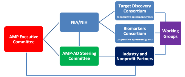 "This organizational chart shows the Accelerating Medicines Partnership Alzheimer's Disease governance structure. On the left side, the chart shows the AMP Executive Committee box connecting horizontally to boxes for NIA, the AMP-AD Steering Committee, and Industry and Nonprofit Partners. The NIA box connects vertically to the AMP-AD Steering Committee box and horizontally to boxes for the Target Discovery Consortium and Biomarkers Consortium, both of which say ""cooperative agreement grants"". The AMP-AD Steering Committee box, directly under the NIA box, is connected to the Industry and Nonprofit Partners box. The Target Discovery Consortium, Biomarkers Consortium, and Industry and Nonprofit Partners boxes are stacked vertically and all connect horizontally to the Working Groups box at the far right."