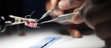 Researcher doing a delicate procedure with tweezers.