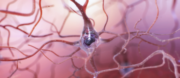 Healthy neuron