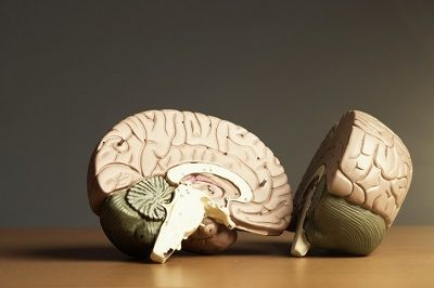 model of two halves of the brain