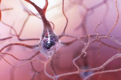 illustration of healthy neuron in the human brain