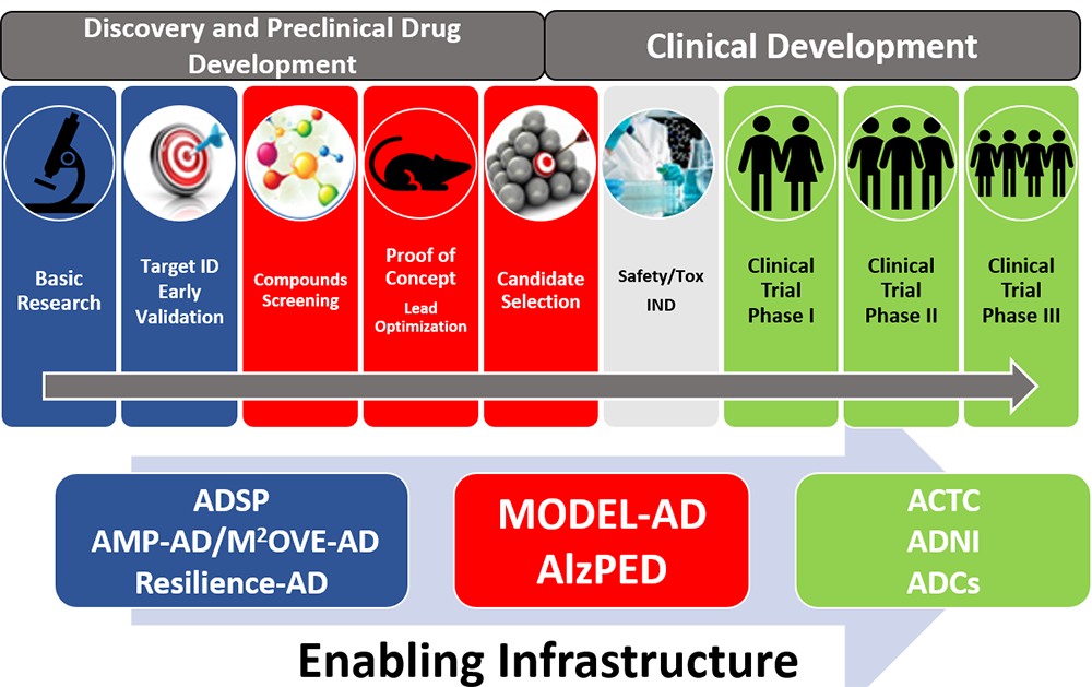 Label: Enabling Infrastructure. There are two top-level categories, Discovery and Preclinical Drug Development, and Clinical Development. Under Discovery and Preclinical Drug Development are: Basic Research, Target ID Early Validation, Compounds Screening, Proof of Concept (Lead Optimization), and Candidate Selection (which also falls under the second top-level category). Under Clinical Development are: Candidate Selection, Safety/Tox IND, Clinical Trial Phase I, Clinical Trial Phase II, and Clinical Trial Phase III. Basic Research and Target ID Early Validation are grouped together above the label 'ADSP, AMP-AD/M2OVE-AD, Resilience-AD'. Compounds Screening, Proof of Concept (Lead Optimization), and Candidate Selection are grouped together above the label 'MODEL-AD, AlzPED'. Clinical Trial Phase I, Clinical Trial Phase II, and Clinical Trial Phase III are grouped together above the label 'ACTC, ADNI, ADCs'. Both groups have an arrow going left to right to show a progression in the reading order presented.
