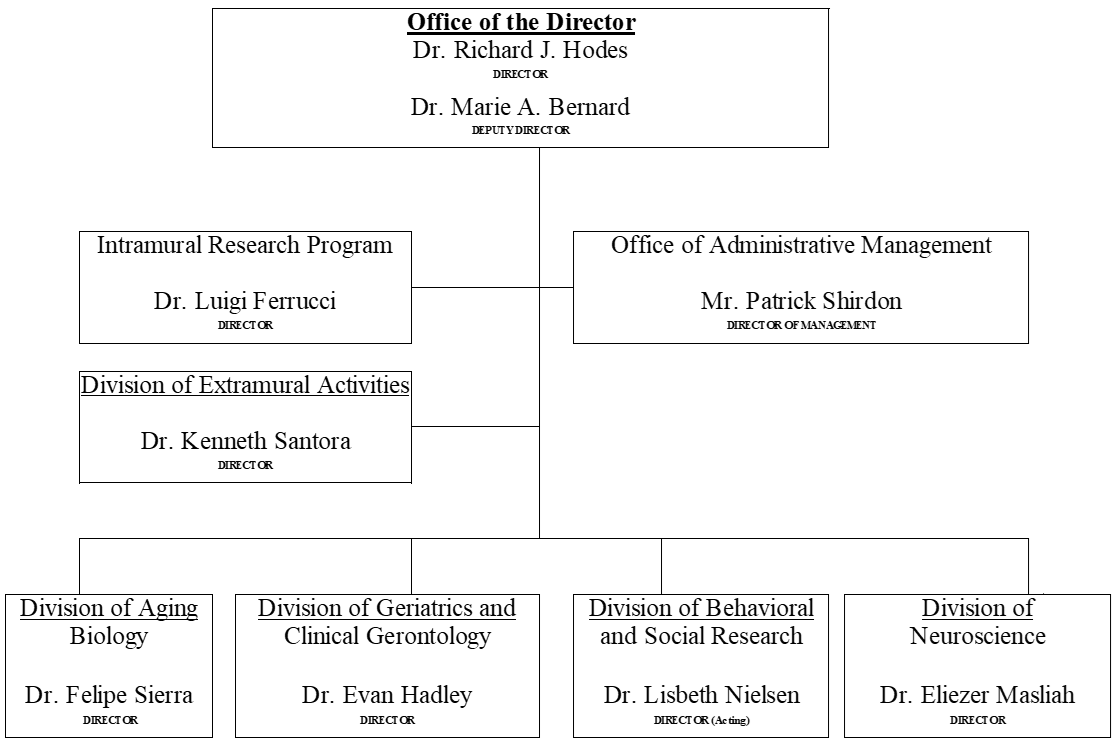 Organizational Structure diagram -- Office of the Director, Dr. Richard J. Hodes, Director, and Dr. Marie A. Bernard, Deputy Director. All the following departments report directly to the Office of the Director, in 4 strata. 1 Intramural Research Program, Dr. Luigi Ferrucci, Director. 2 Office of Administrative Management, Mr. Patrick Shirdon, Director of Management. 3 Division of Extramural Activities, Dr. Kenneth Santora, Director. 4 Division of Aging Biology, Dr. Felipe Sierra, Director; Division of Geriatrics and Clinical Gerontology, Dr. Evan Hadley, Director; Division of Behavioral and Social Research, Dr. Lisbeth Nielsen, Director (Acting); Division of Neuroscience, Dr. Eliezer Masliah, Director.