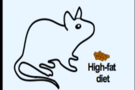Mice fed high fat diets were protected from metabolic damage by the molecule NAM