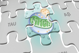 Puzzle piece illustration with mitochondria